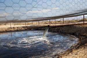 fracking waste pipe