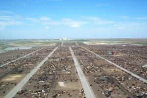 Cattle feedlot