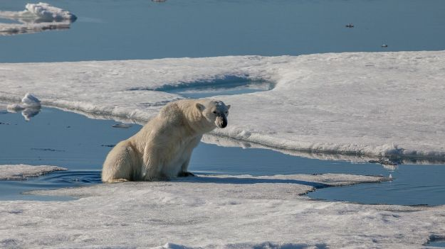Polar_bear_silently_stepping_from_an_ice_floe