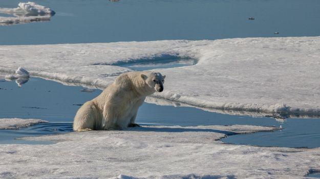 Polar_bear_silently_stepping_from_an_ice_floe