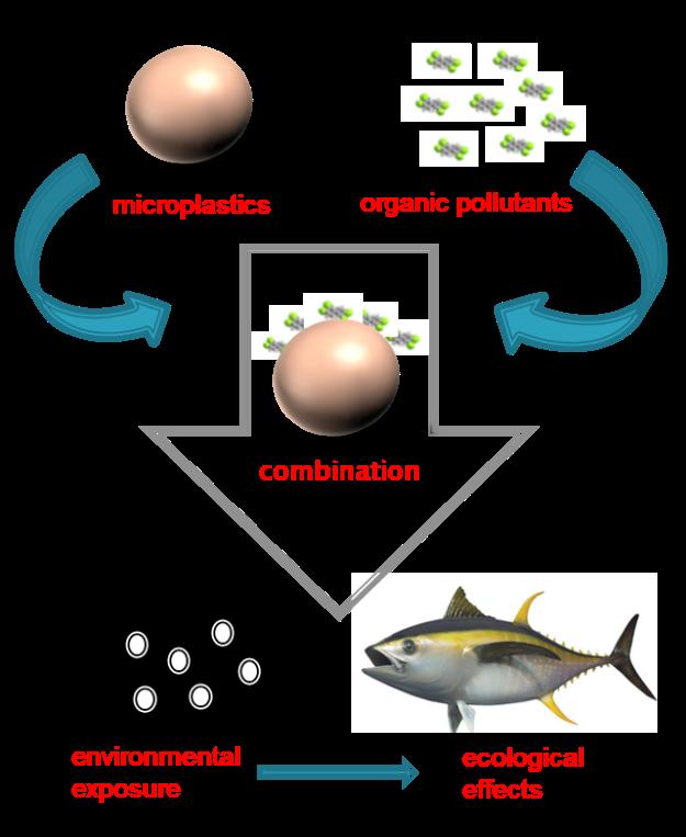 microplastics flowchart