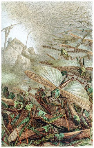 766px-A_swarm_of_locusts_(cleaned)_-_Emil_Schmidt