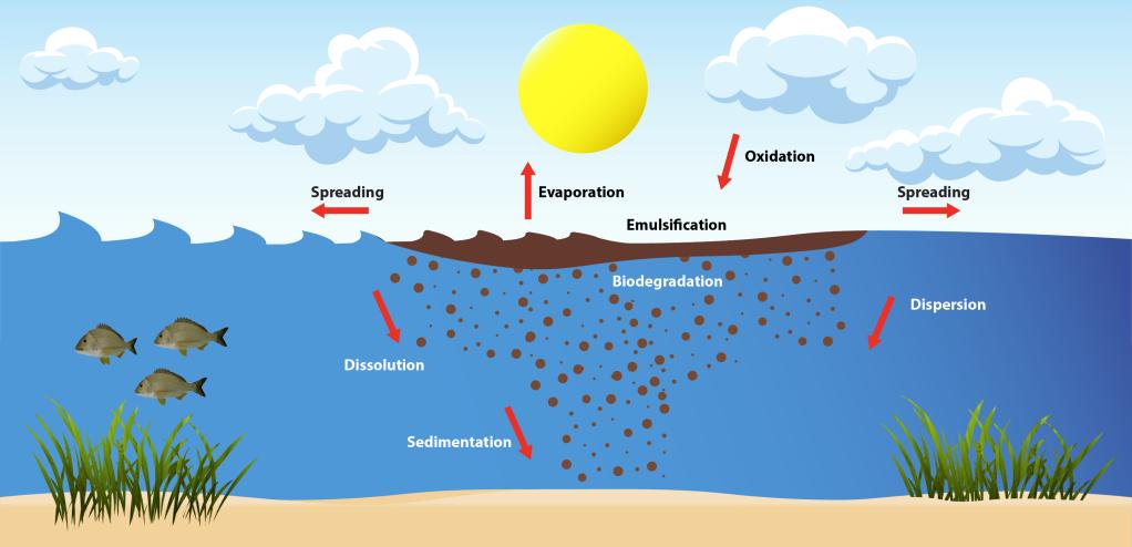 Illustration shows oil spreading, evaporating, emulsifying, oxidating, biodegrading, dissolving, dispersing, and absorbing into the sediment of the ocean bottom.